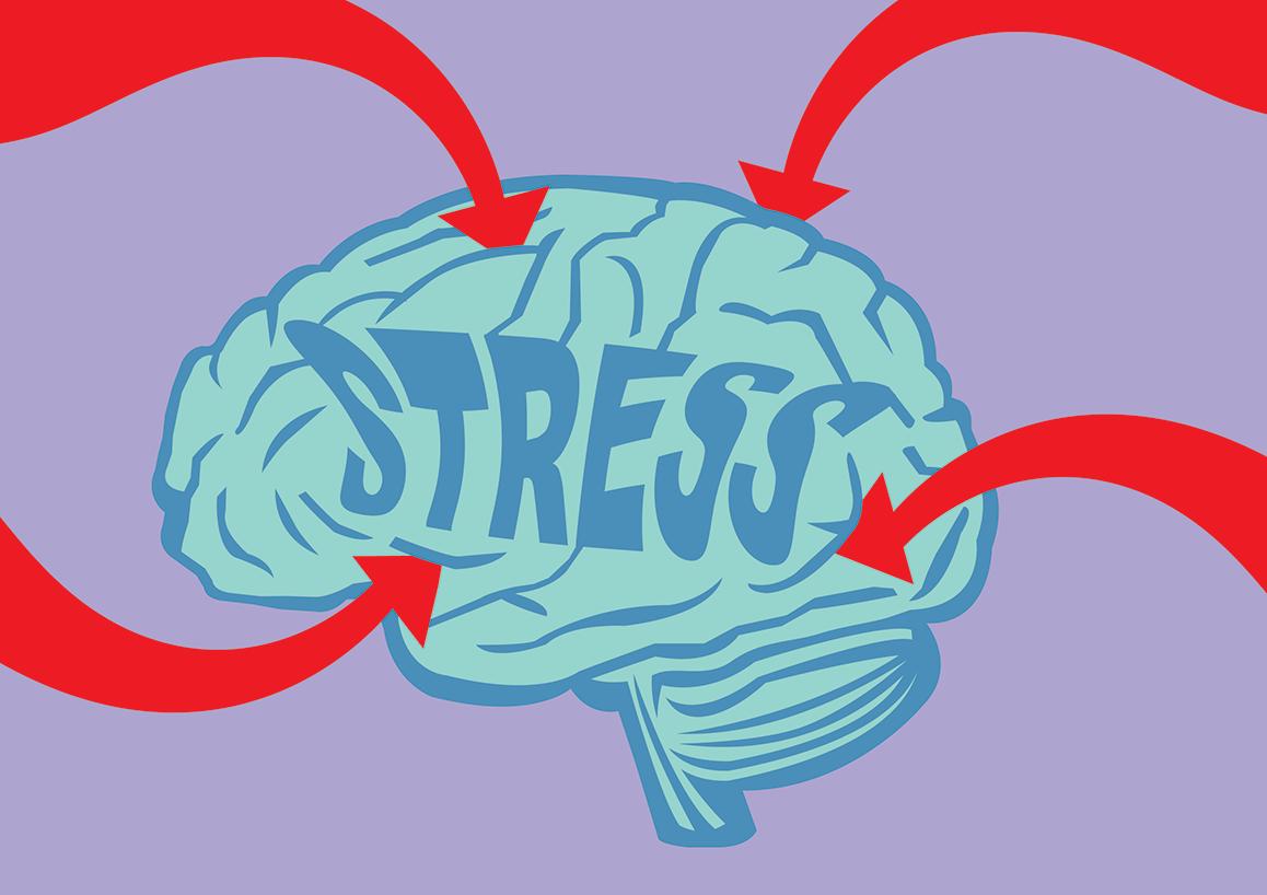 how stress impacts children's brain development